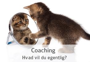 Coaching link